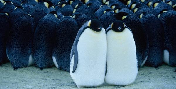 Amazon | 皇帝ペンギン プレミア...
