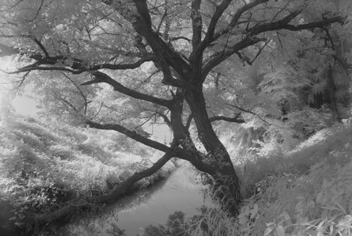 R72フィルター使用後(樹木の撮影)