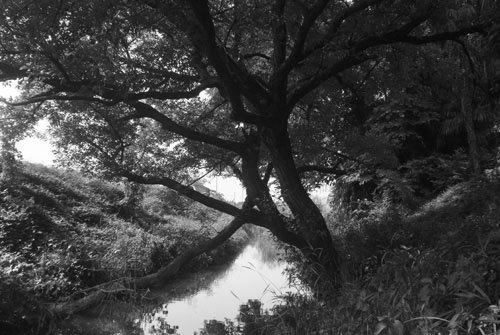 R72フィルター使用前(樹木の撮影)