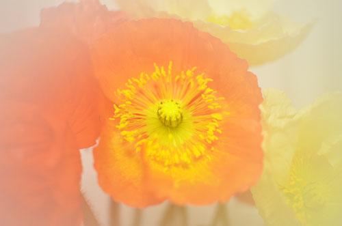 センターイメージフィルター使用後(花の撮影)