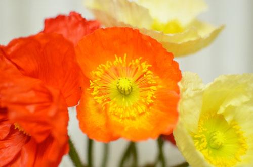 センターイメージフィルター使用前(花の撮影)