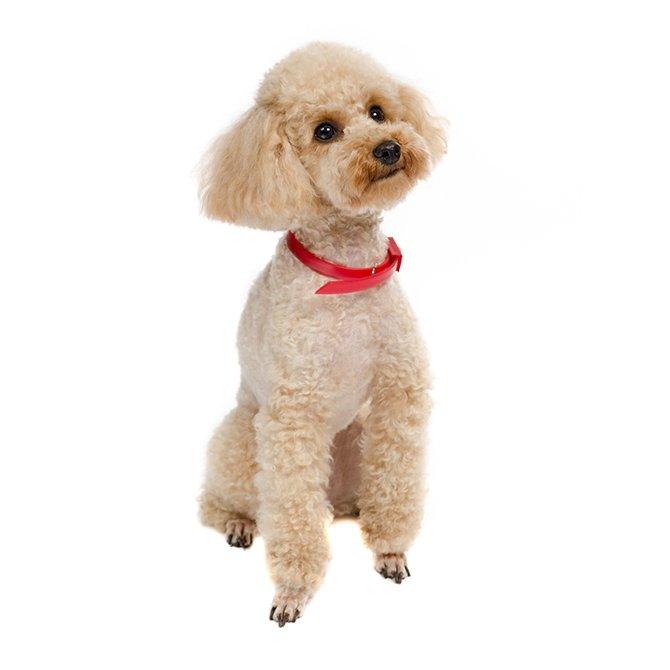 犬用品セール