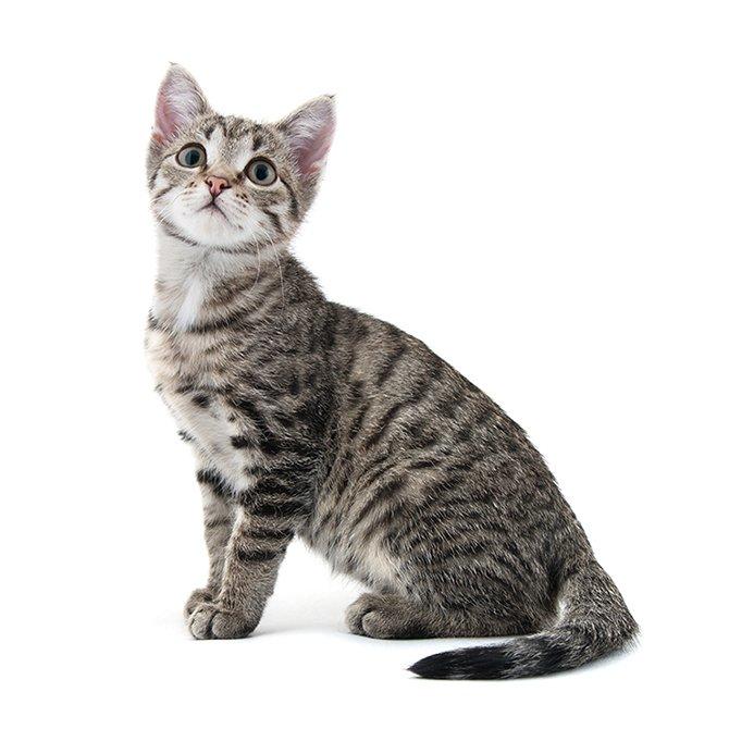 猫用品セール