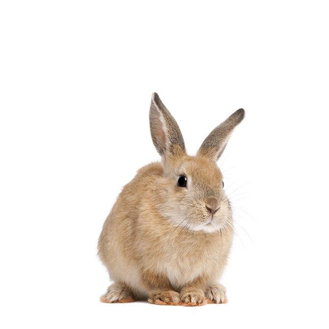 小動物用品セール