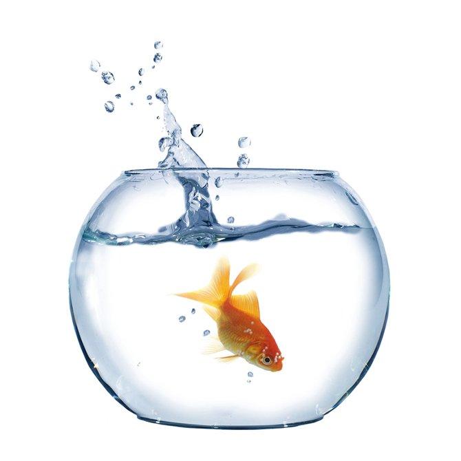 観賞魚用品セール