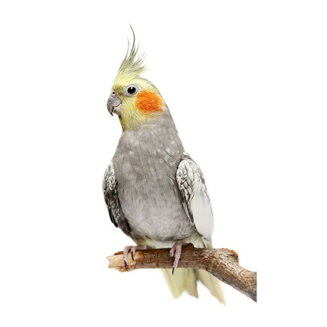 鳥用品セール