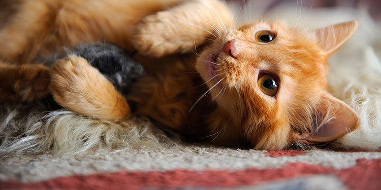 子猫の飼い始めガイド