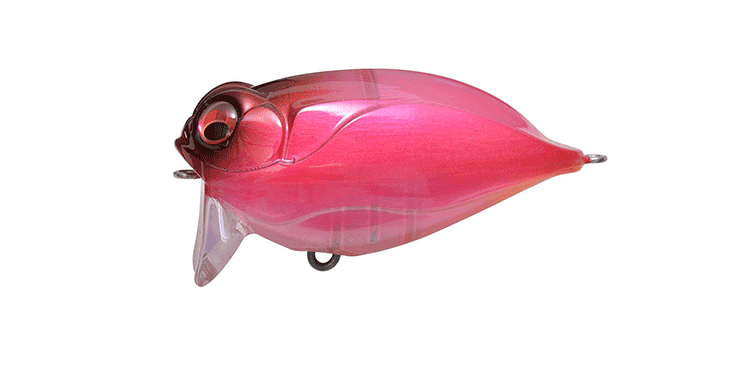 fishing_Lures_Flies_Cate03
