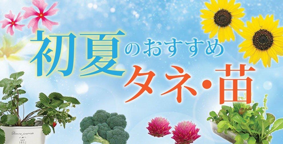 初夏のおすすめタネ・苗(イメージ)