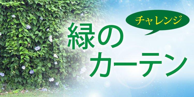 チャレンジ 緑のカーテン