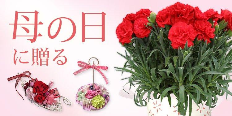 母の日に贈る、お花特集