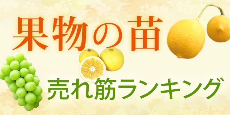 果物の苗 売れ筋ランキング