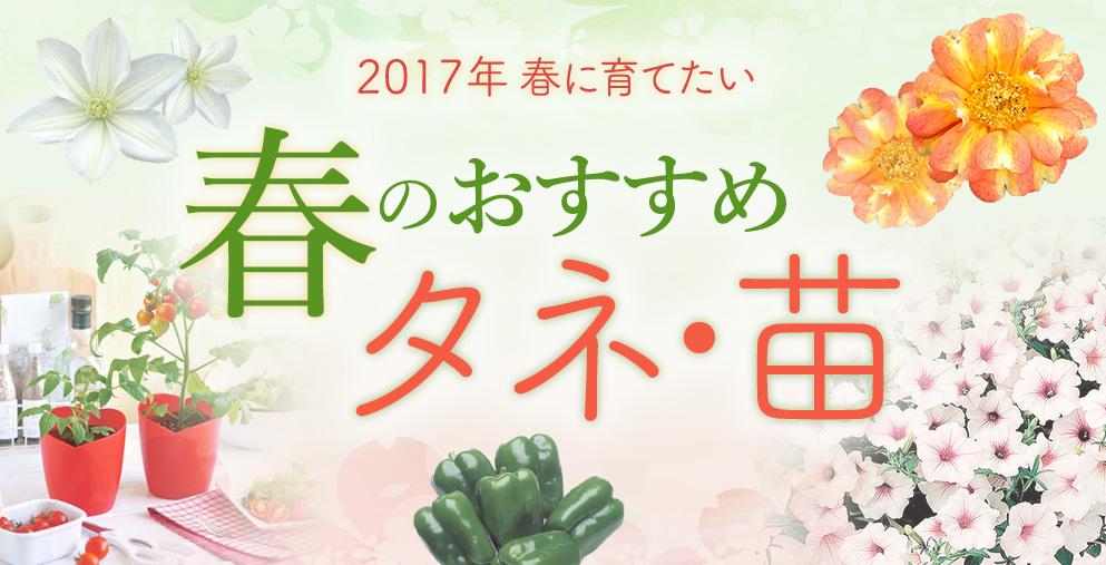 春のおすすめタネ・苗(イメージ)