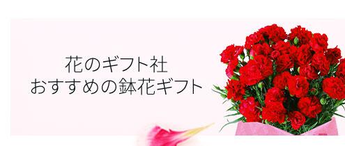 母の日のギフトにおすすめの鉢花ギフト