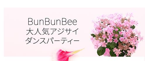 BunBunBee 大人気アジサイダンスパーティー