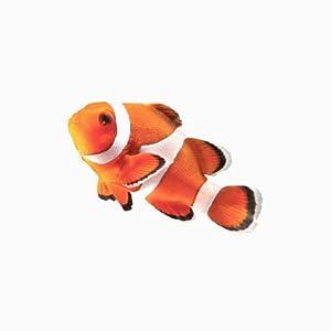 観賞魚用品