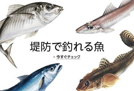 堤防で釣れる魚