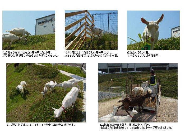 ヤギによるエコ除草