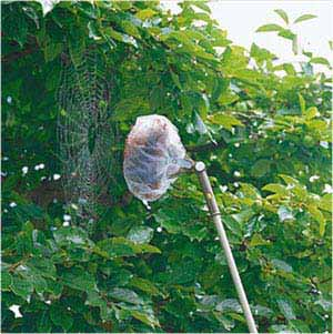 アズマ クモの巣取り