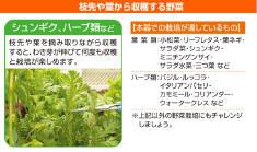 山善(YAMAZEN) 水耕栽培キット 畑deおやさい YVP-40 (家庭菜園)