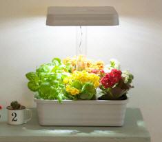 山善(YAMAZEN) LEDプランター お部屋畑 家庭菜園(室内栽培)セット YLP-28