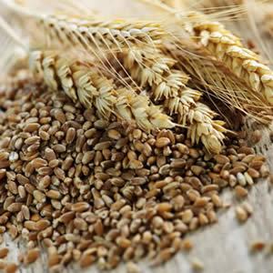 米ぬかや大豆などから作った天然マグネシウム<br>