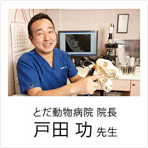 歯科治療専門の獣医さんもおすすめ!