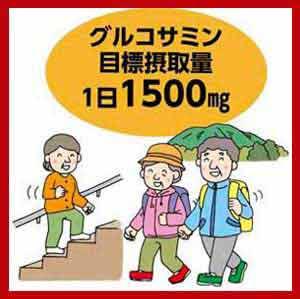 ●1日摂取量1,500㎎が目標のグルコサミン