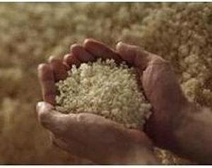 小さな米ぬかの中の大きなパワー