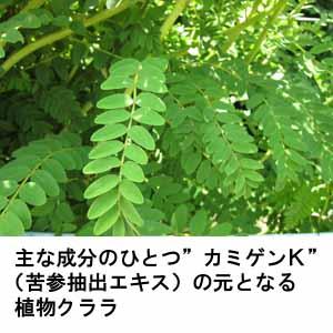 植物抽出エキスが髪の成長をスムーズに促します
