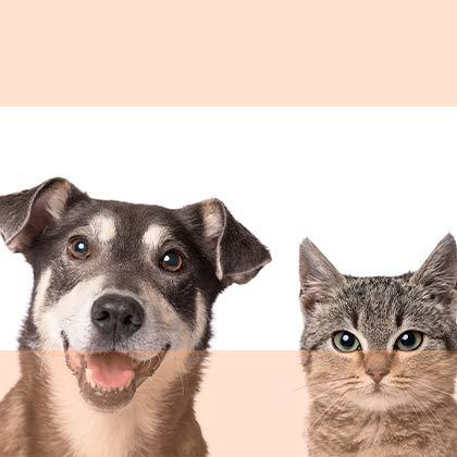 Pets Markdown