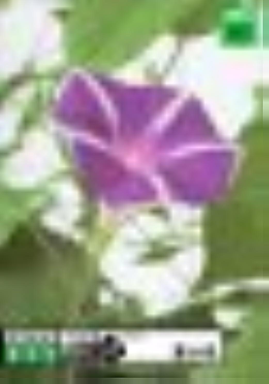 フック最適発揮するPhotobit 17 夏の花