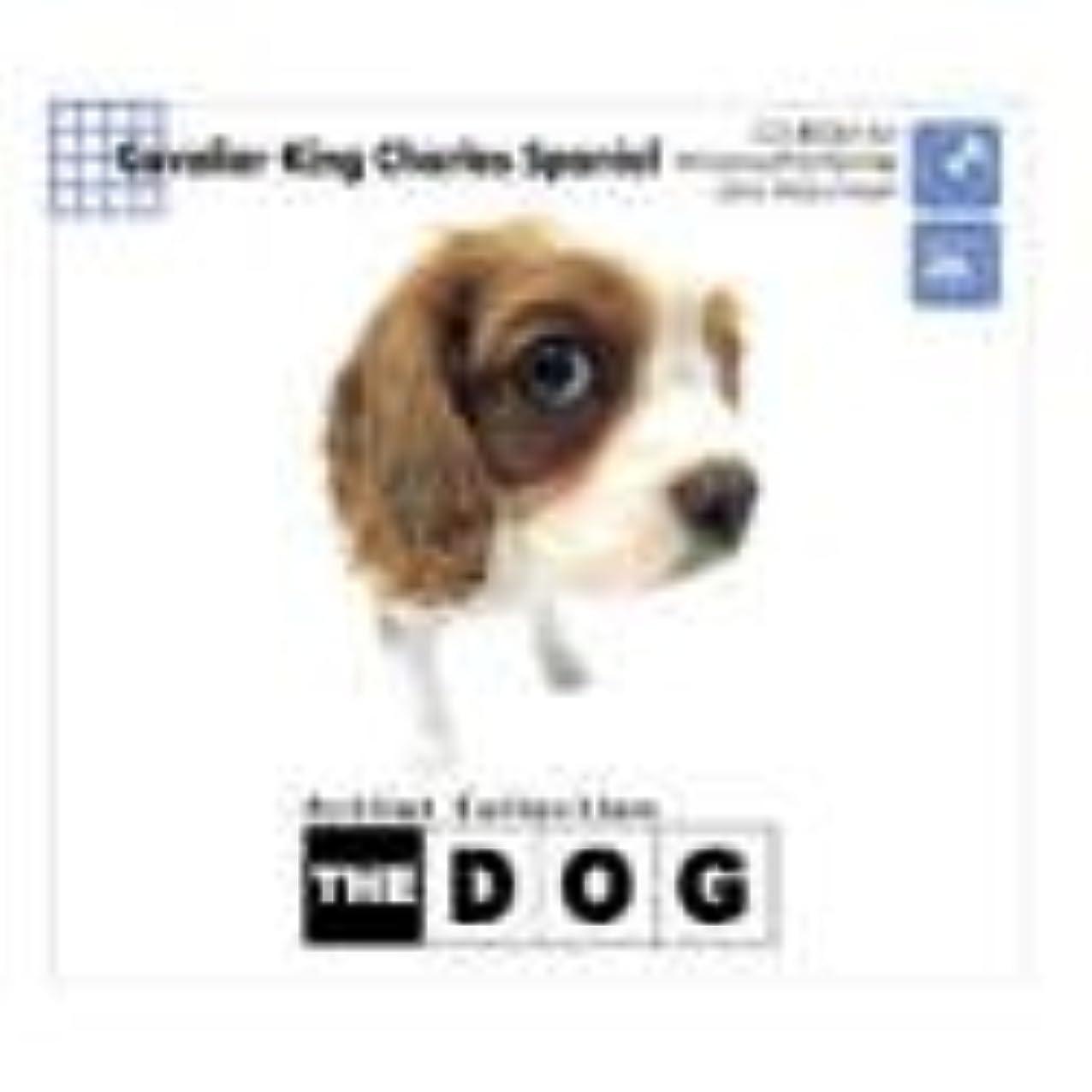 証明命令的鷲THE DOG ~ CavalierKingCharlesSpaniel