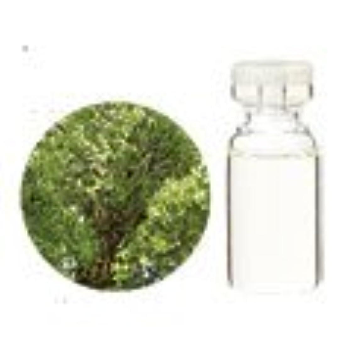 悔い改める離れた広まった生活の木 アロマオイル クスノキ (1000ml)
