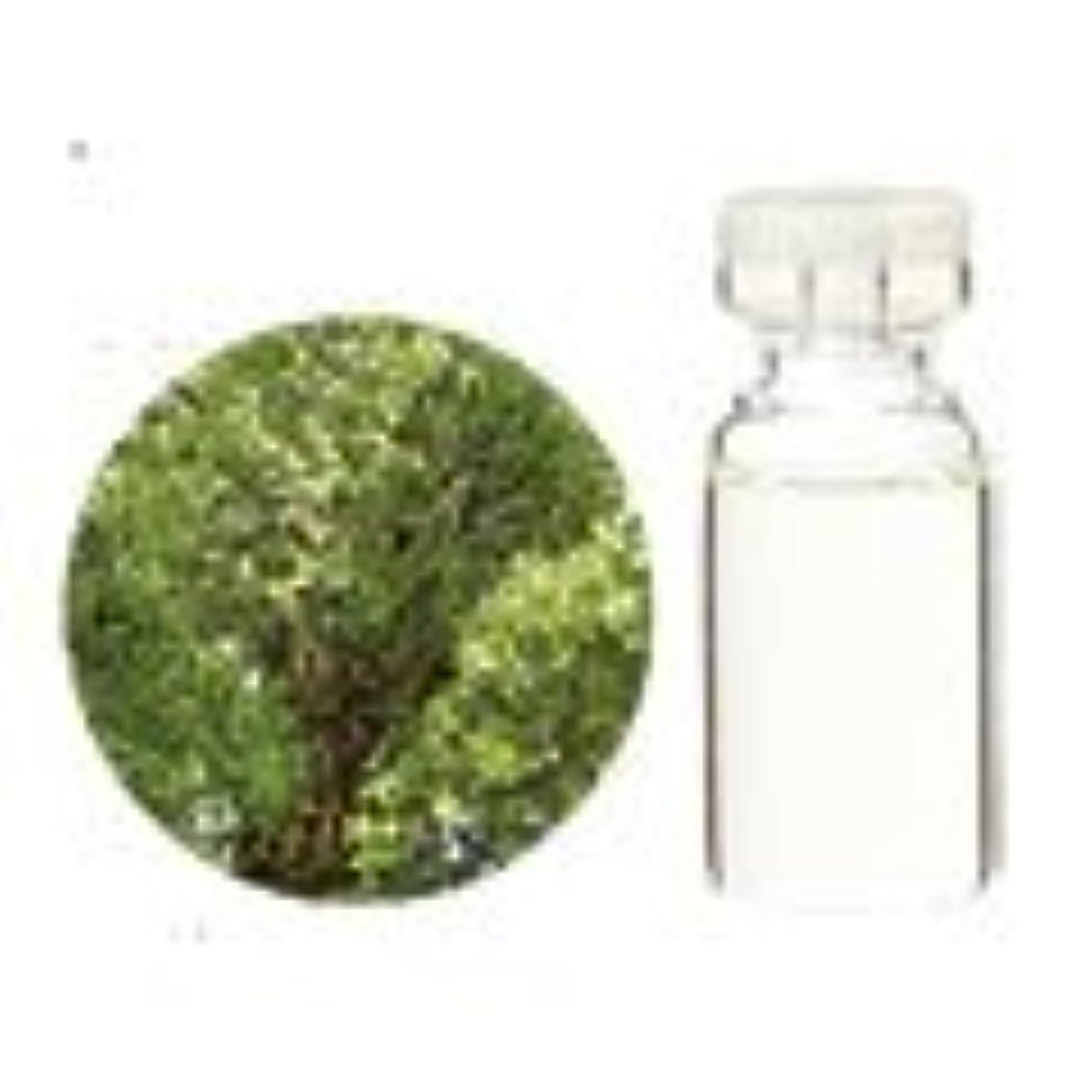 切り刻む大気ピッチ生活の木 アロマオイル クスノキ (1000ml)