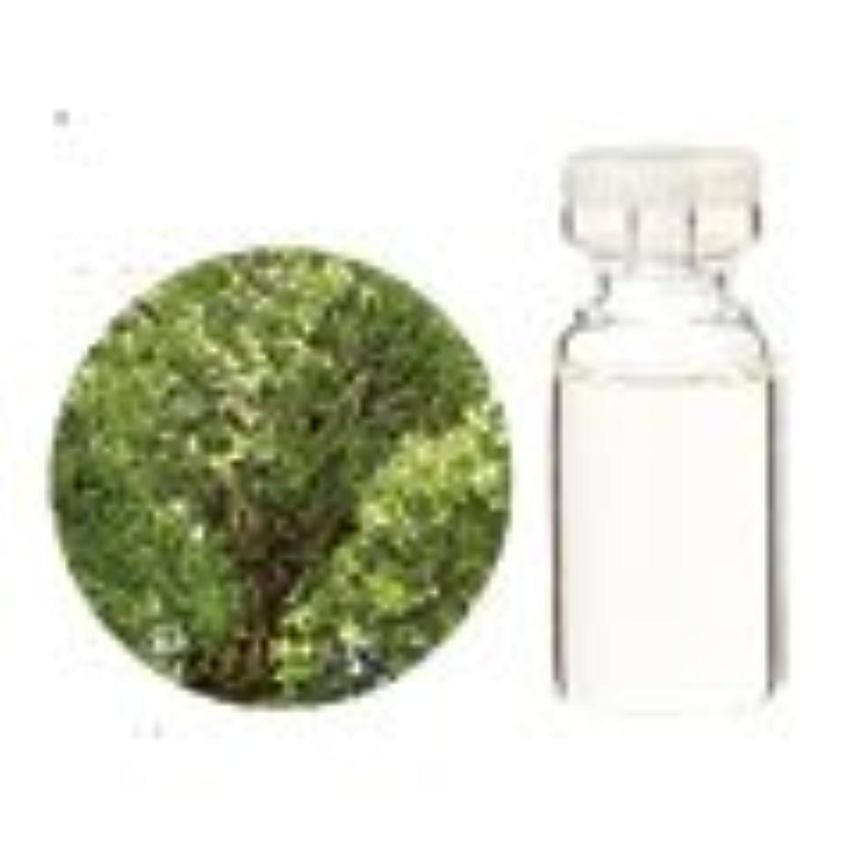 強度ソケット切り離す生活の木 アロマオイル クスノキ (1000ml)