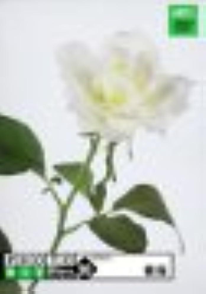 学校の先生分類テレビ局Photobit 20 薔薇