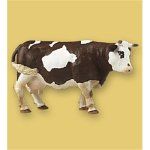 Brown & White Standing Cow