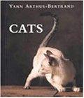 Cats 画像