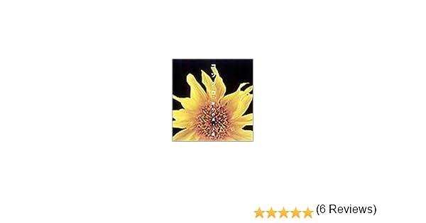 Amazon | 願いの詩/太陽 (CCCD) ...