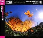 驚異的な虫の世界 01 蝶