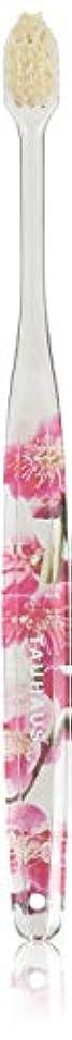 ために単独でレトルトOluma 白馬毛歯ブラシ(梅の花)