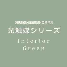 光触媒加工 インテリアグリーン パキラ&ジャロファKU2個セット