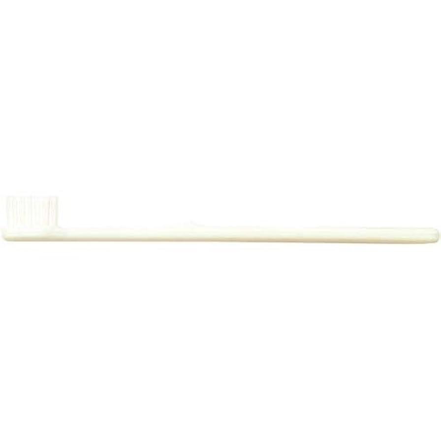 バター組内なるインスタント歯ブラシ 500本