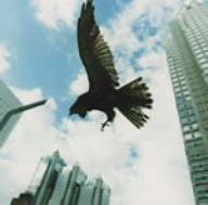 図南の鵬翼 [DVD]
