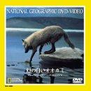 ナショナル・ジオグラフィック 幻の白いオオカミ [DVD] 画像