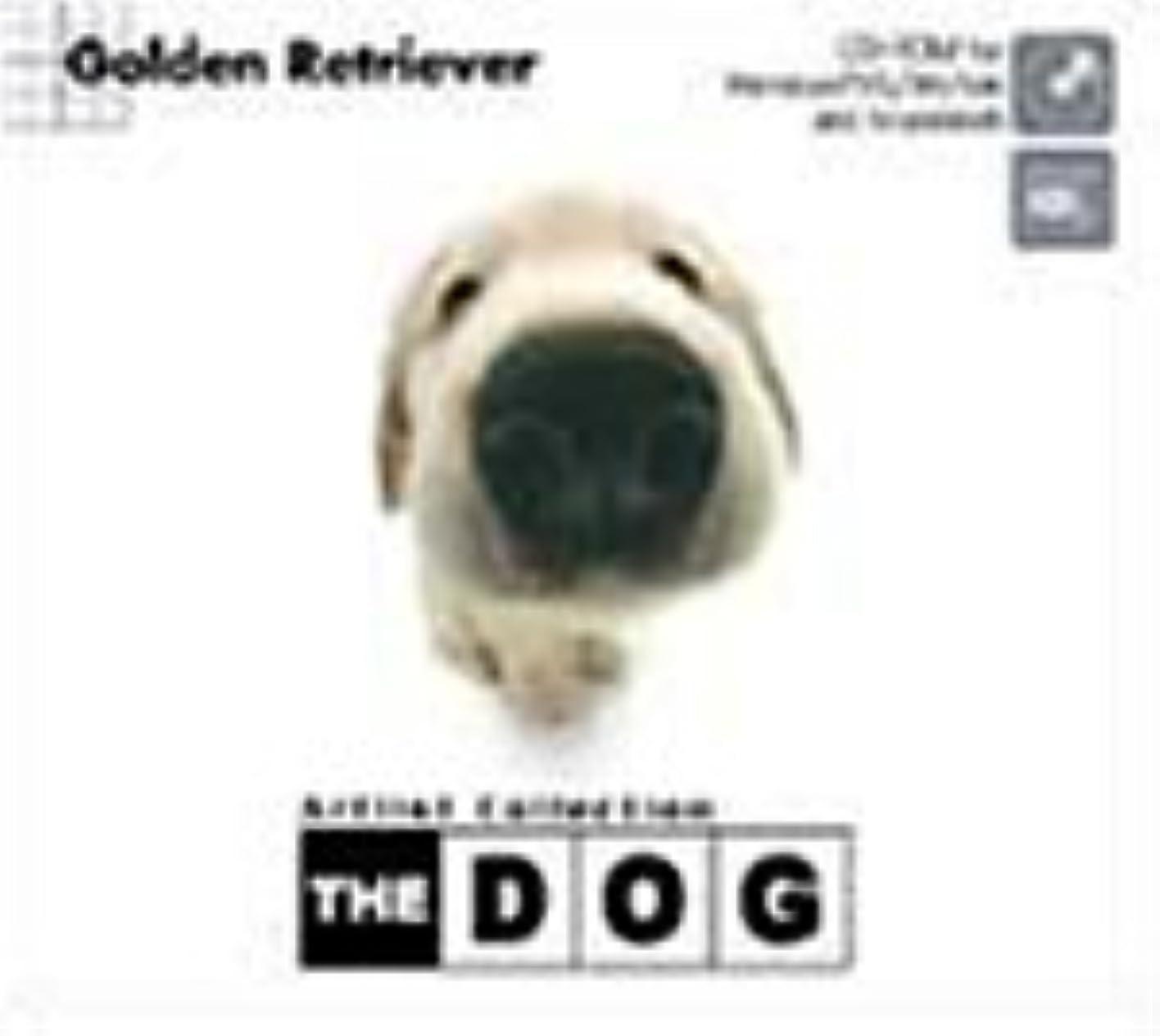 北フック数字THE DOG ~Golden Retriever