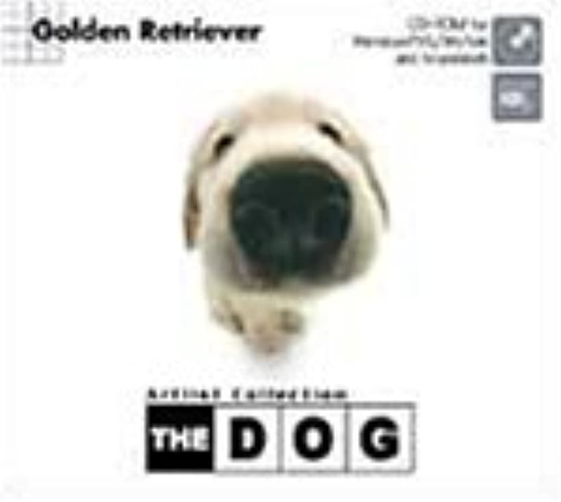 歯痛変な作りますTHE DOG ~Golden Retriever