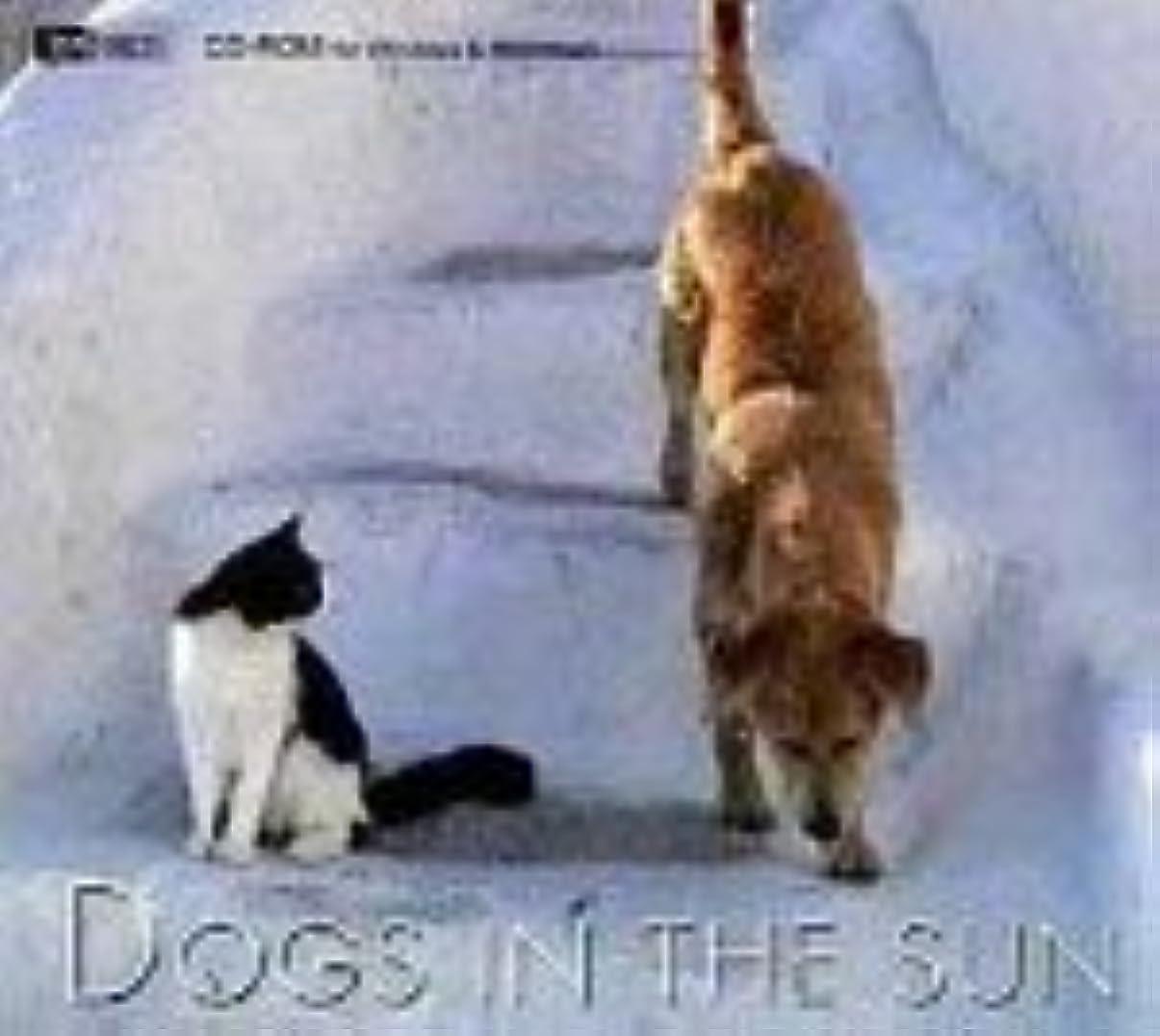 スケジュールフロンティア先生Dogs In The Sun