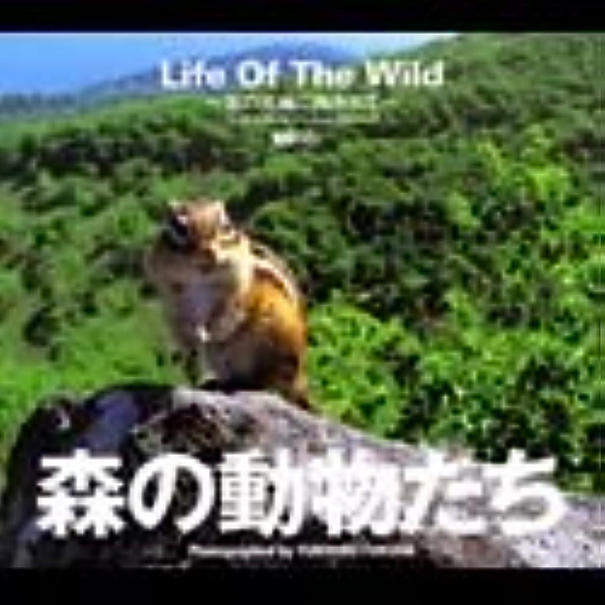 ビーチクロス残り森の動物たち Life Of The Wild